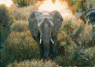Dylan Scott Pierce - Her Majesty - This was the first painting Dylan created after his first African Safari at Kruger National Park. It shows the pride with which the animals carry themselves in the wild compared to those he had previously seen in zoos.