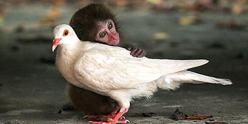 monkey-pigeon-hug