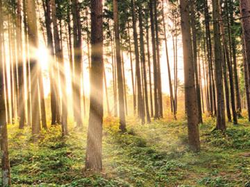sunlight forest trees