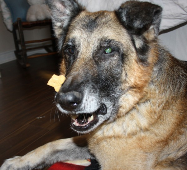 Funny pictures of dogs trying to catch cookies