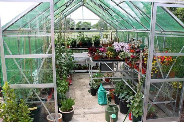 greenhouse, garden, valentines day, garden, green