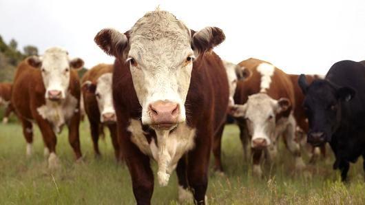 Cowspiracy documentary