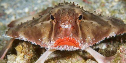 Strange Facts: Lipstick fish scales