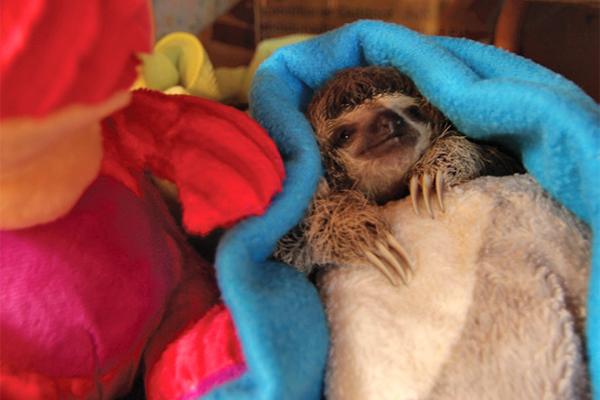 Meet The Sloths Costa Rica